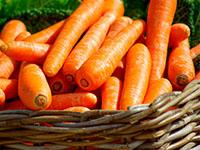 Правильно сеем морковь