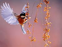 Как привлечь на участок птиц