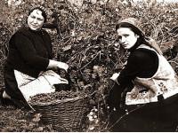 София Ротару: работа в саду омолаживает