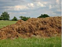 Почему нельзя вносить в почву свежий навоз