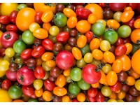Радуга вкуса: разноцветные томаты