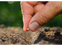Как правильно выбрать семена для посадки