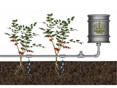 Система автоматического капельного полива АкваДуся Start на 50 растений [ФМ1370]